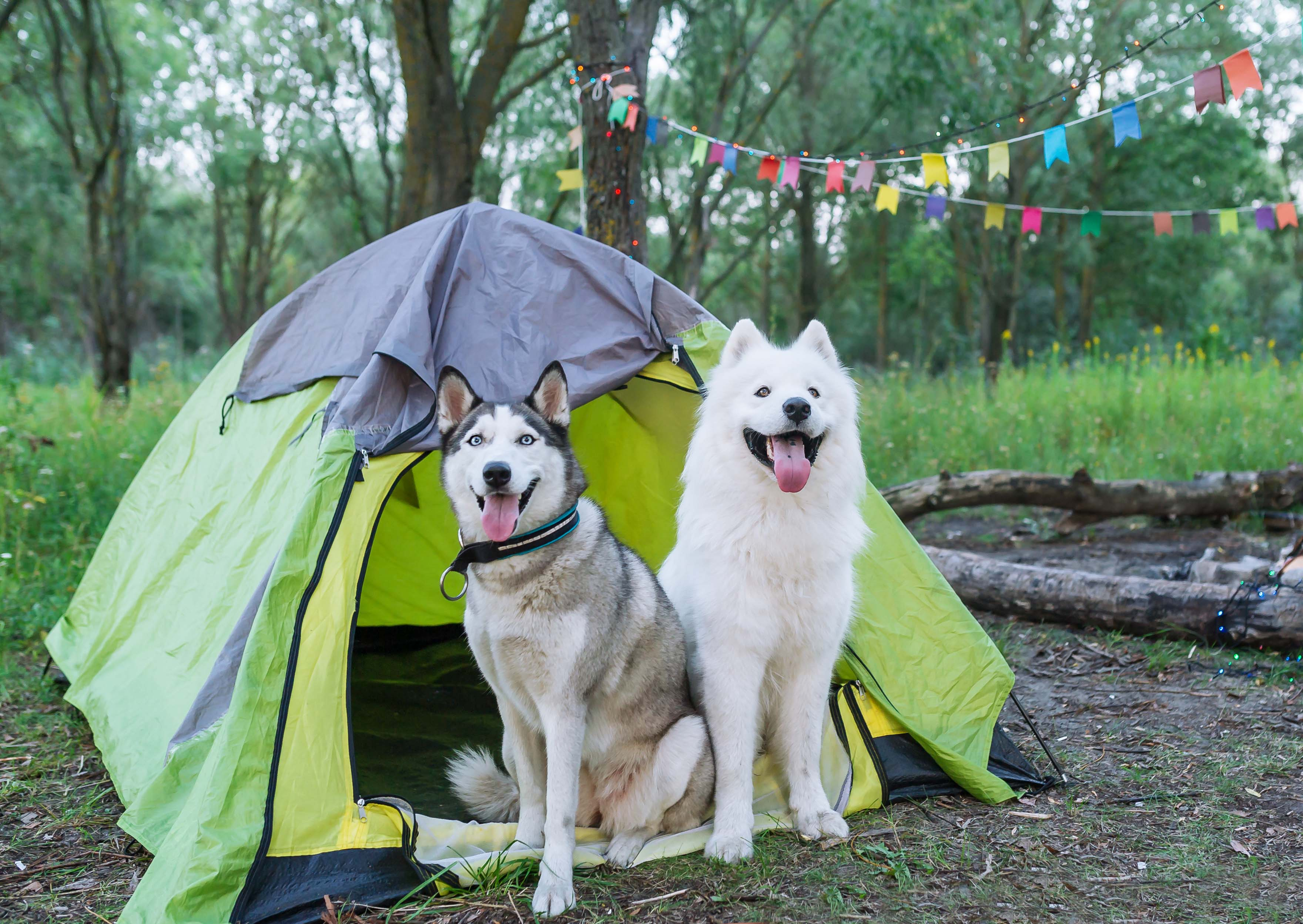 Camping with dogs | Land Rover Explore